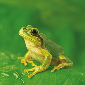 Exploring evolving risks and challenges deloitte us for Frog consulting